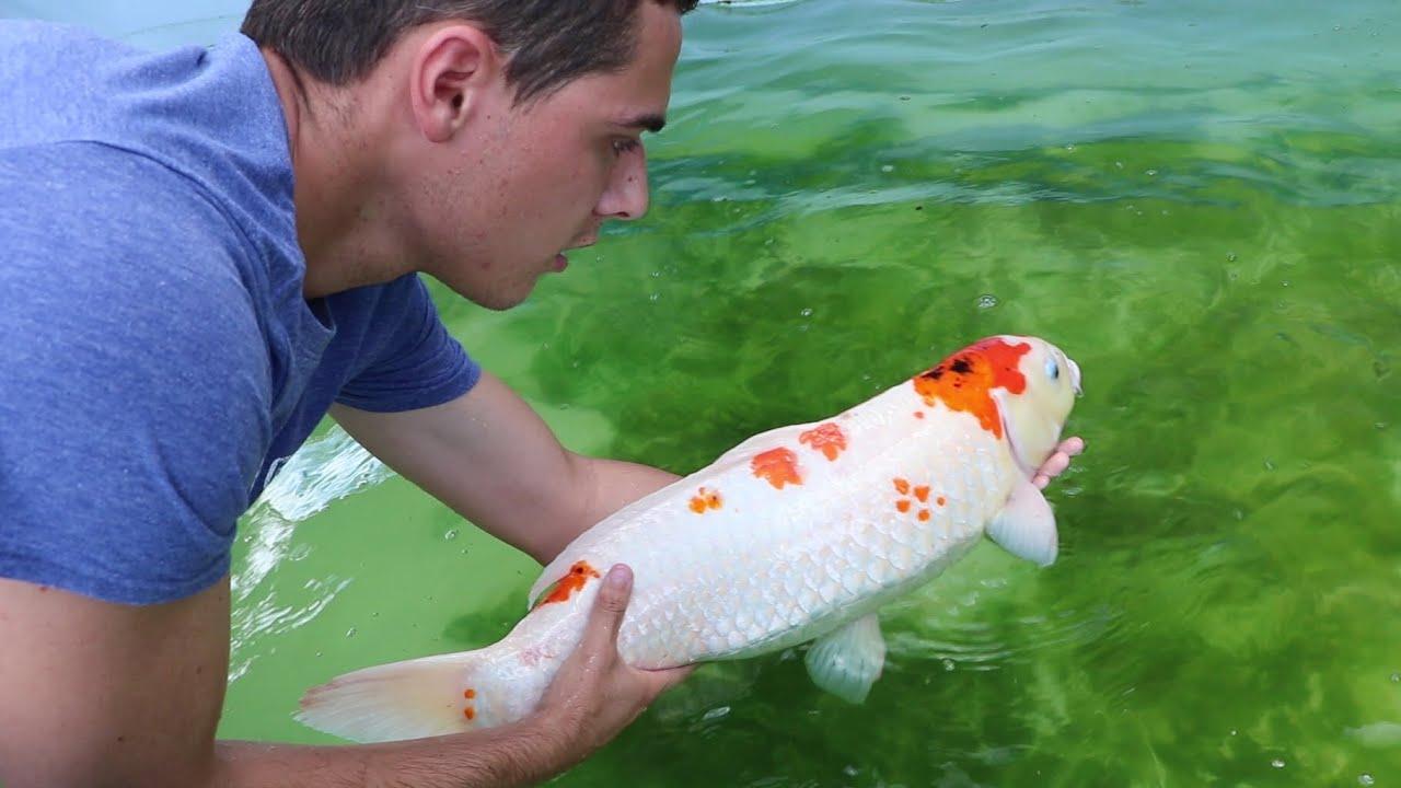 acclimatize fish