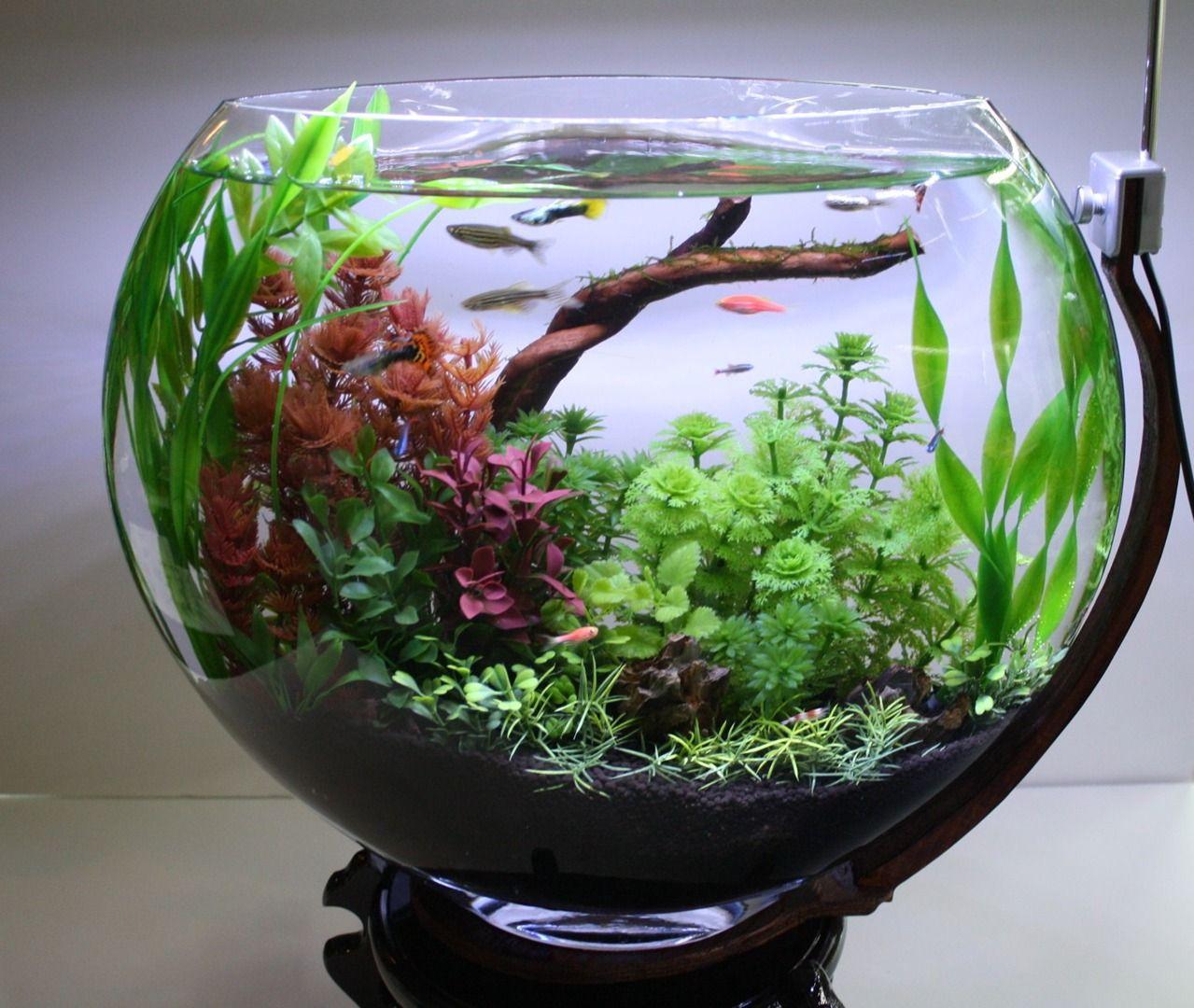 goldfish bowl setup