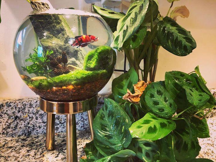 plant and goldfish